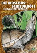 Die Moschus-Schildkröte Sternotherus odoratus