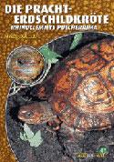 Die Pracht-Erdschildkröte Rhinoclemmys pulcherrima